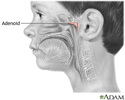 Which trap and destroy germs in the air that enter the nasopharynx